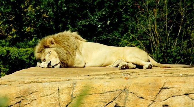 ライオンズゲートのエネルギーアップデイト