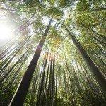 魂が疲れた時は 「地球と光のエネルギーワーク」