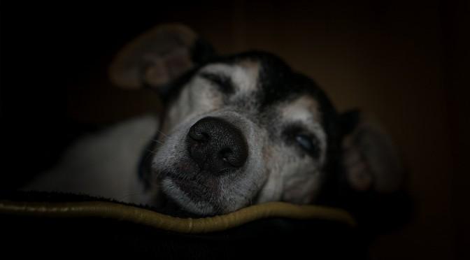 ヒプナゴジア: 眠りにつく前に見る奇妙なヴィジョンについて