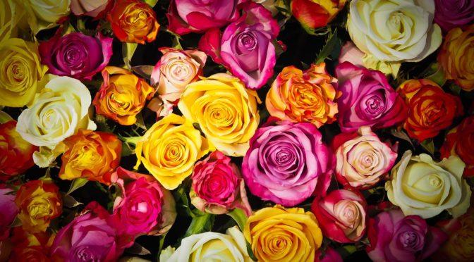 あなたは何色のバラ? あなたを表す色のバラを選んで、メッセージを知ろう!