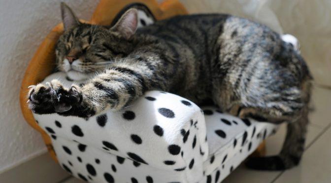 寝る前のリラックス ぐっすり眠れるヨガのポーズ 9例
