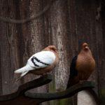 夜に鳥の鳴き声を聞くときのスピリチュアルな意味